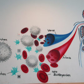 Clemens Brentano Europaschule Blutkreislauf